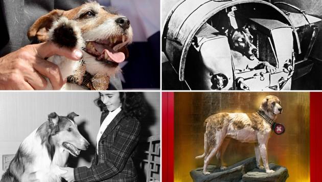 "Im Uhrzeigersinn: ""Uggie"", ""Laika"", ""Lassie"" und ""Barry"" (Bild: AFP, APA/dpa, AP, APA/NMBE)"