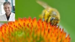 Für Allergiker lebensbedrohlich: Der Stich einer Wespe führt zu Kreislaufversagen und Atemnot. (Bild: Andreas Tischler, Dr. Andreas Schnabl)