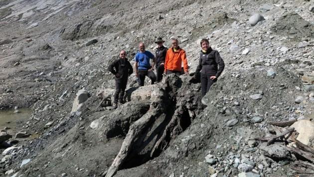 Pasterze gab knapp acht Meter langen Baumstamm frei (Bild: Nationalpark Hohe Tauern)