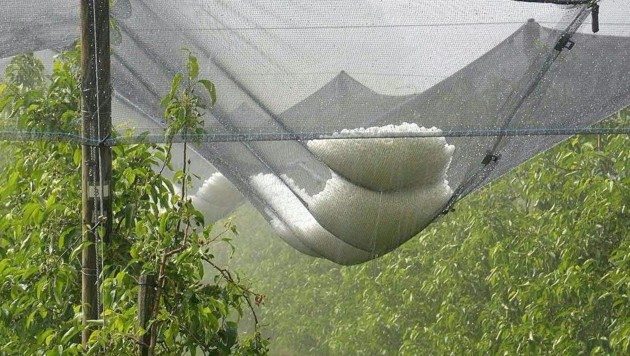 Hagelauffangnetze über einer Obstplantage im Bezirk Weiz. (Bild: APA/FF LUDERSDORF)