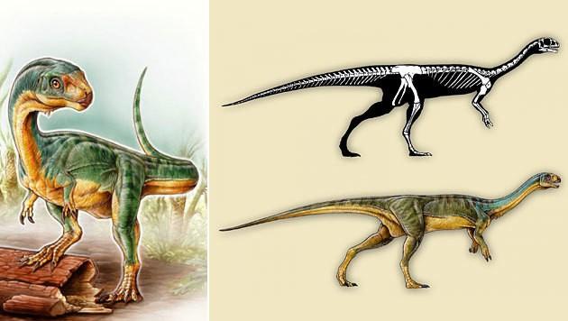 Künstlerische Darstellung des Chilesaurus diegosuarezi und seines Skeletts (Bild: Gabriel Lìo)