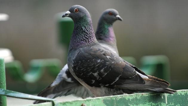 US-Forscher: Vögel sind intelligenter als gedacht