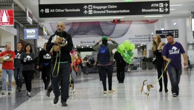 Freiwillige brachten die Chihuahuas zum richtigen Gate.