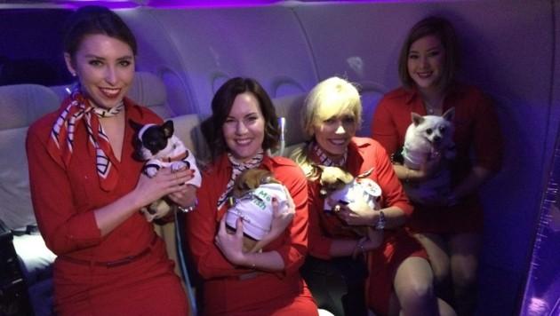 Die Virgin-America-Flugbegleiterinnen freuten sich über die tierischen Gäste.
