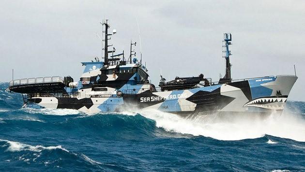 """Die """"Steve Irwin"""" unterwegs auf hoher See gegen Meeres-Wilderer"""