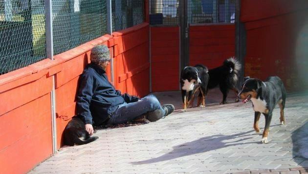 Die Hunde fassen langsam Vertrauen zu den Mitarbeitern des Tierschutzvereins.