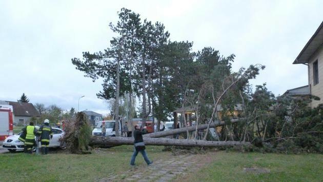 Umgestürzte Bäume in St. Georgen (NÖ)