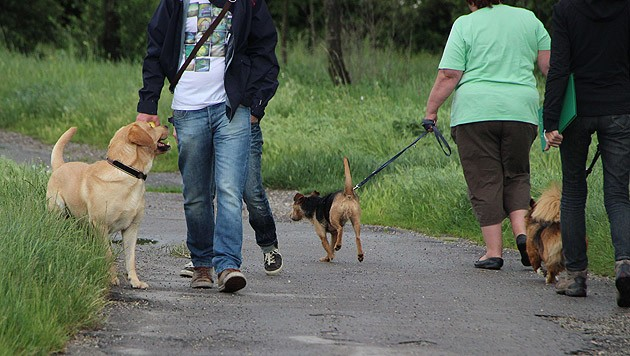 Symbolbild (Bild: Wiener Hundekompetenzzentrum)