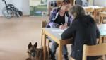 (Bild: Wiener Hundekompetenzzentrum)