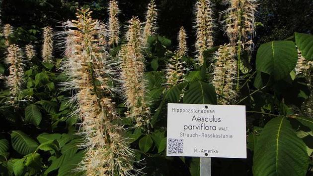 (Bild: Botanischer Garten Graz)