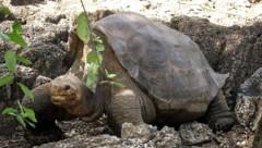 (Bild: Galapagos National Park)