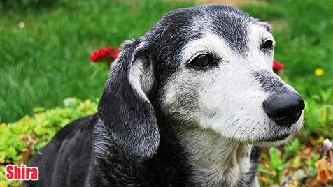 Hunde Suchen Ein Neues Zuhause Kroneat