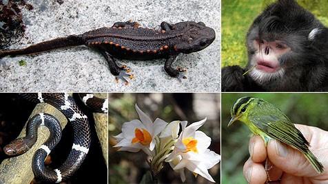 (Bild: EPA, Fauna & Flora International)