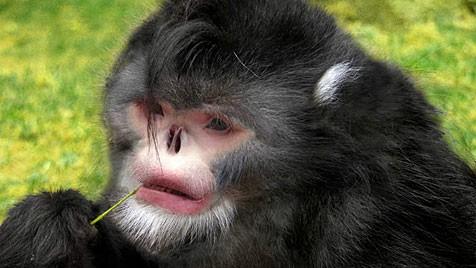(Bild: WWF/Martin Aveling/Fauna & Flora International)
